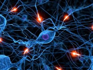 rewire synapses