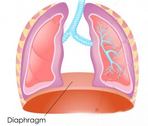 lungs-diagram_2