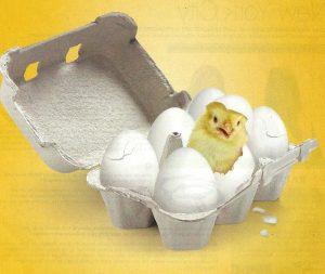 Chix and Egg